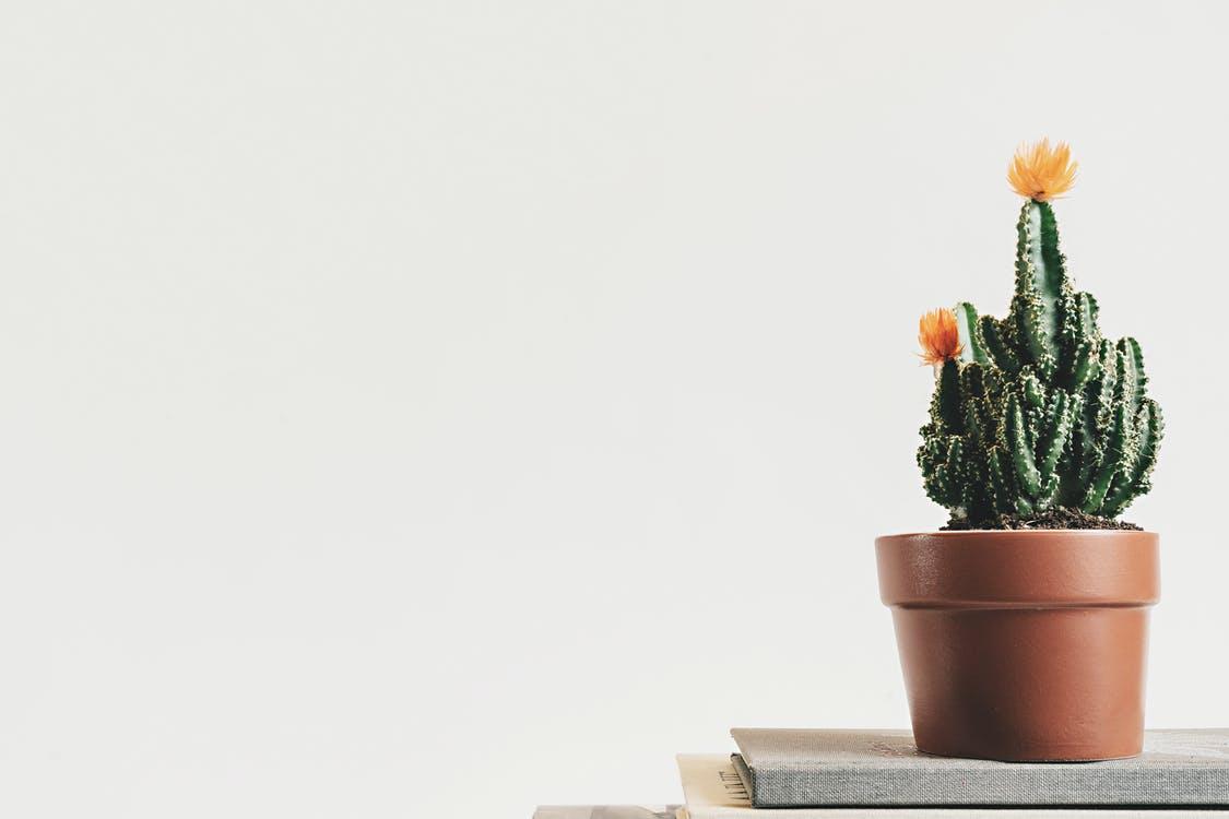 Nettoyer et entretenir des pots de fleurs en terre cuite
