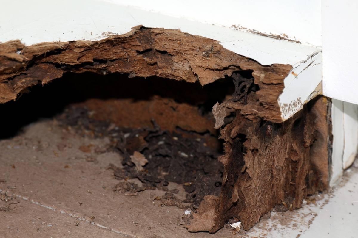Le diagnostic termites pour vendre sur Nice