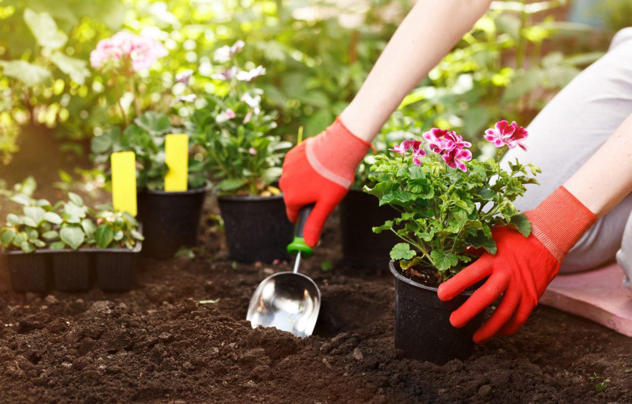Pourquoi devriez-vous créer votre propre jardin ?