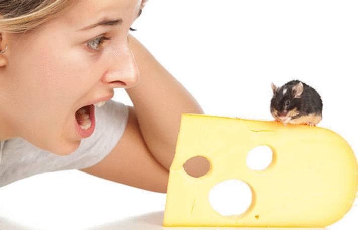 Comment se débarrasser des rats et des souris à la maison – 12 remèdes naturels efficaces